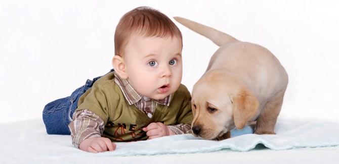 health-headline-baby-dog-spry