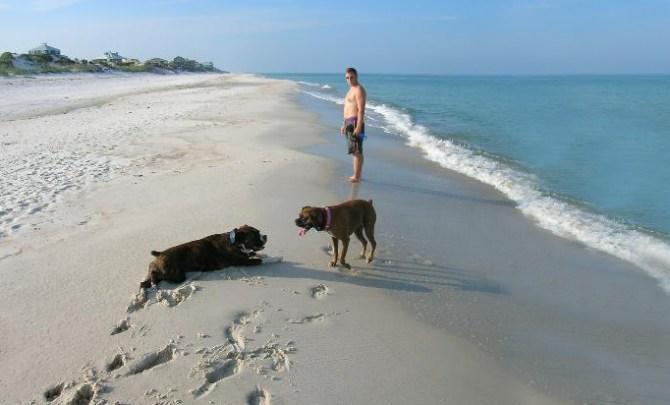 Best dog-friendly beaches.