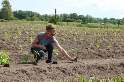 Intern Jackie places pepper plants before transplanting