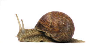 snail-web