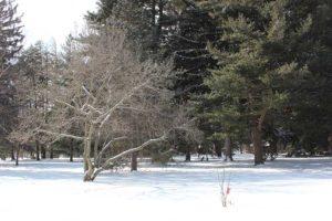 A-Tree-in-Winter