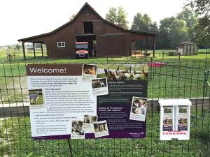 Experience the White Violet Center for Eco-Justice farm with the self-guided walking tour.