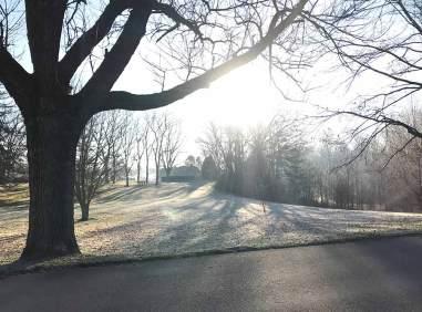 sunrays-tree-web
