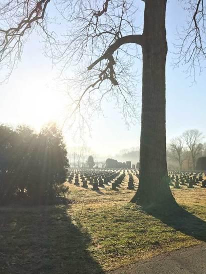 tree-ray-cemetery-web