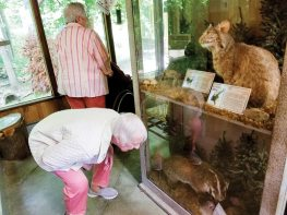 Sister Joan Matthews gets down for a good look at a stuffed badger at the Dobbs Park nature center.