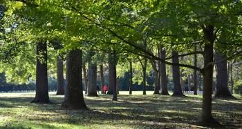 Enjoying a walk in the Woods during a break.