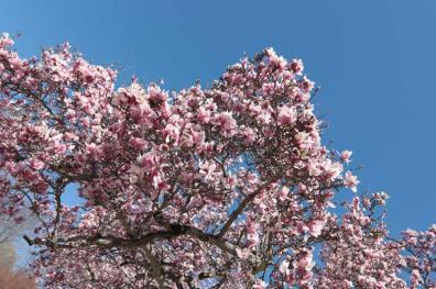 Spring scenery WEB (10)
