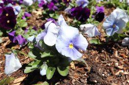 Spring scenery WEB (16)