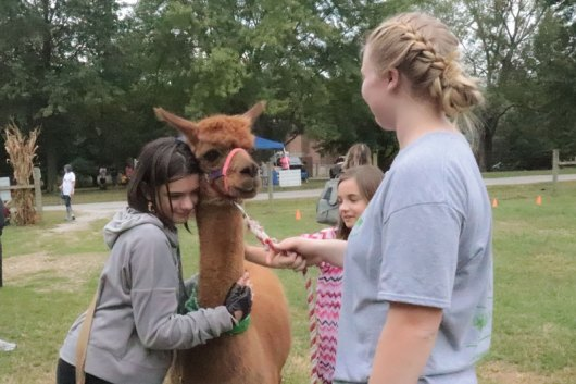 Fall-Farm-Day-_-alpacas-007-WEB