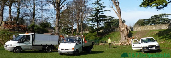 Chichester tree surgeon