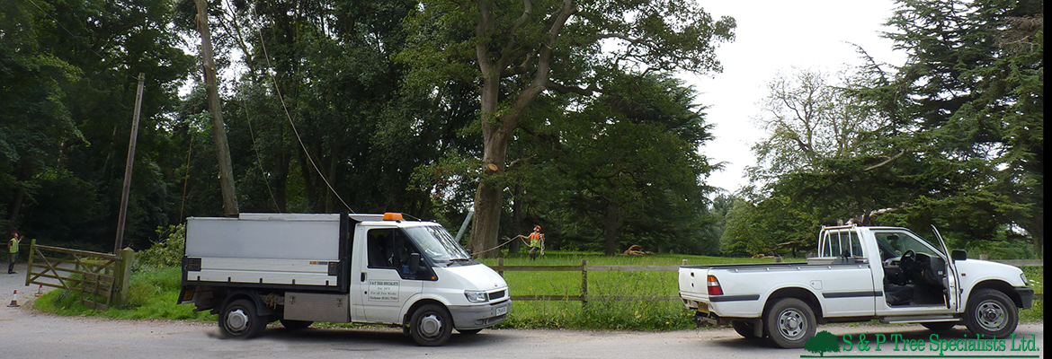 Chichester tree surgery