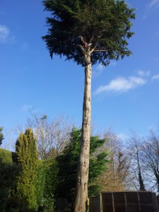 Contact chichester tree surgery