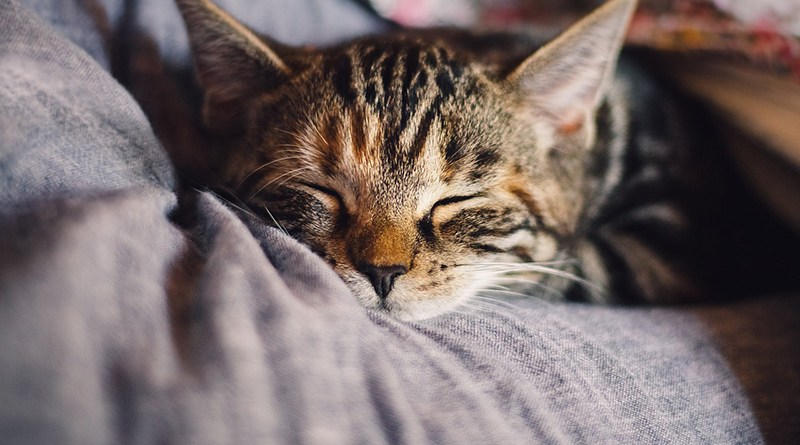 Cat Image by KatinkavomWolfenmond from Pixabay