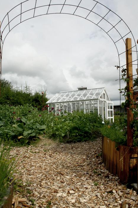 Grönsakslandet med lila vallmo.