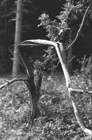 ADOX-Silvermax-in-SPUR-UFP-2