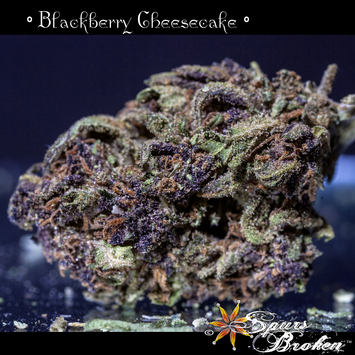 Blackberry Cheesecake - Cannabis Macro Photography by Spurs Broken (Robert R. Sanders)