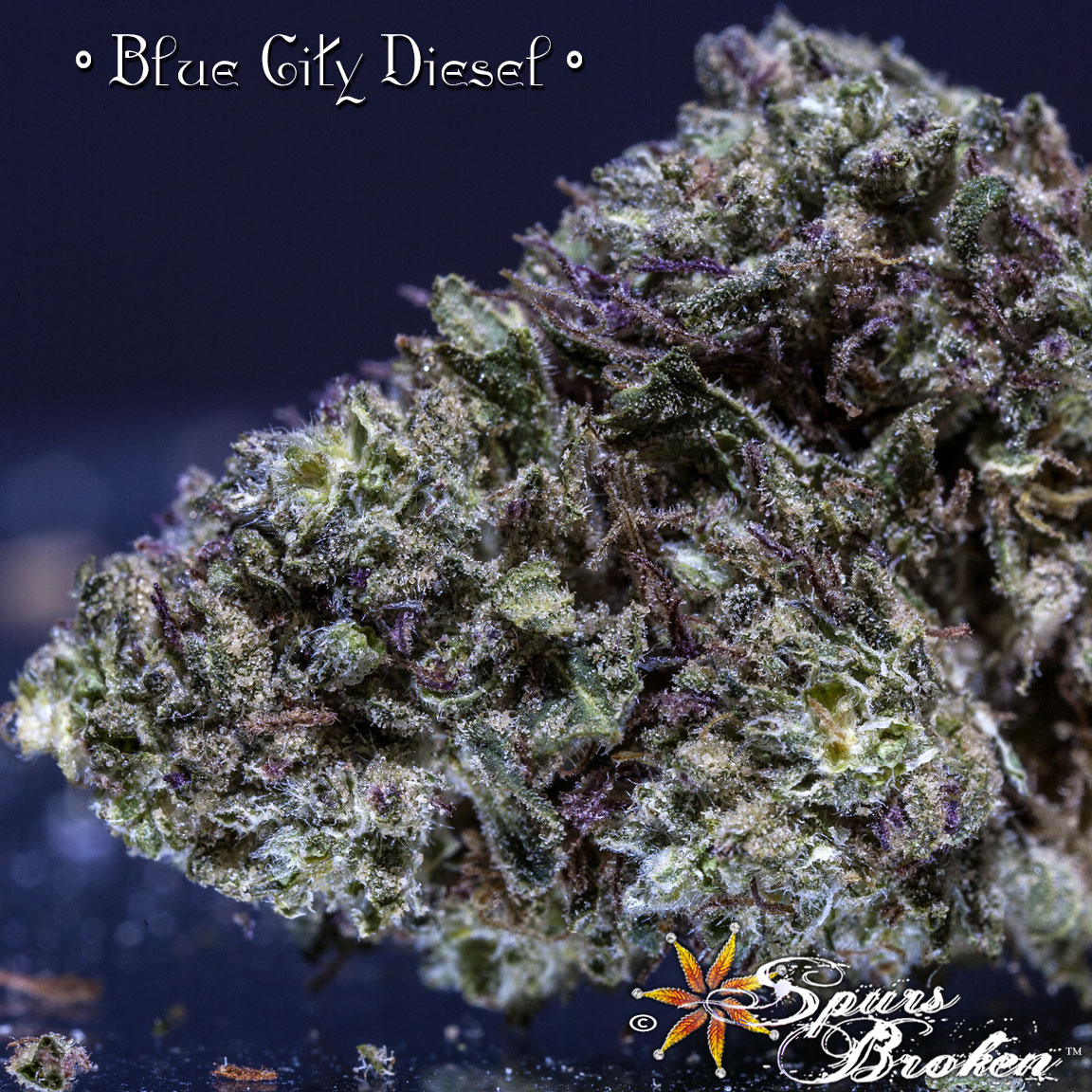 Blue City Diesel - Cannabis Macro Photography by Spurs Broken (Robert R. Sanders)