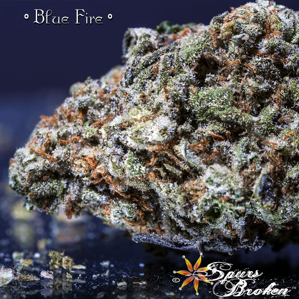 Blue Fire - Cannabis Macro Photography by Spurs Broken (Robert R. Sanders)