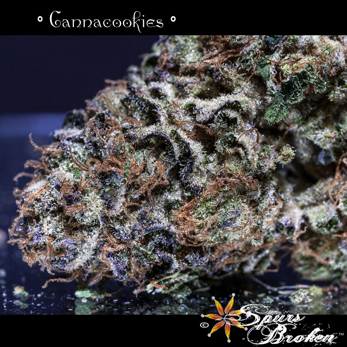 Cannacookies -Cannabis Macro Photography by Spurs Broken (Robert R. Sanders)