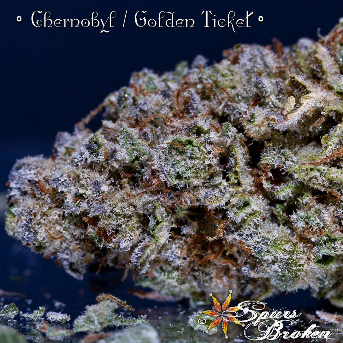 Chernobyl / Golden Ticket - Cannabis Macro Photography by Spurs Broken (Robert R. Sanders)