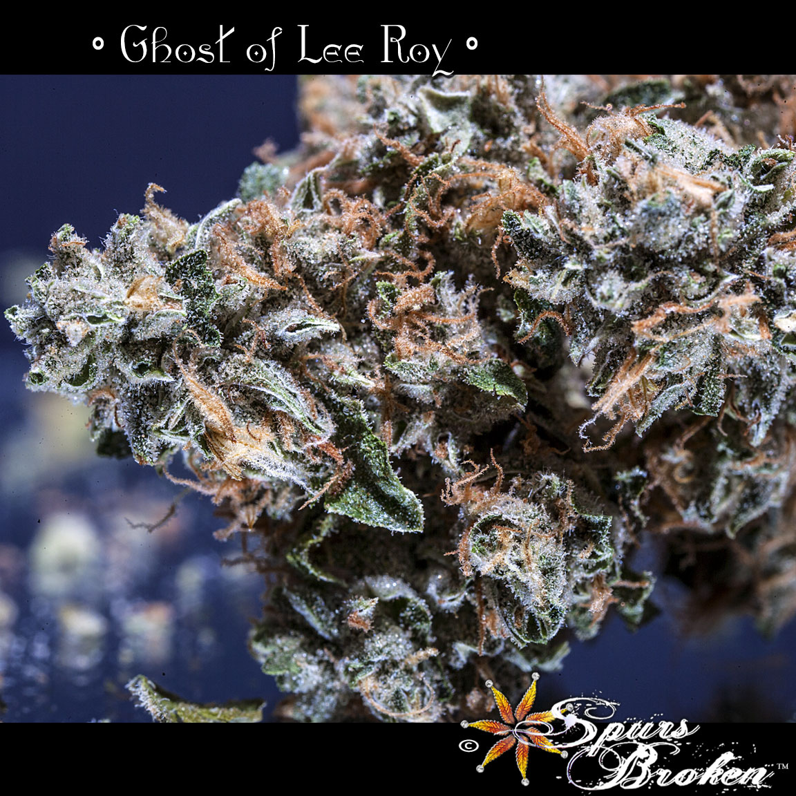 Ghost of LeeRoy -Cannabis Macro Photography by Spurs Broken (Robert R. Sanders)