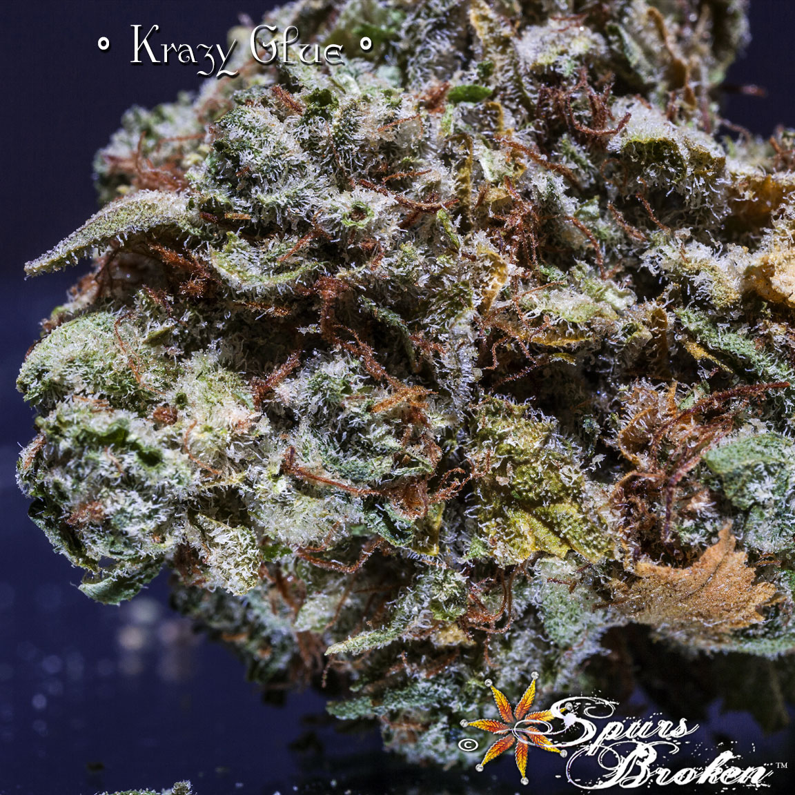 Krazy Glue - Cannabis Macro Photography by Spurs Broken (Robert R. Sanders)