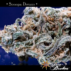 Snoop's Dream - Cannabis Macro Photography by Spurs Broken (Robert R. Sanders)