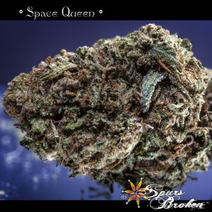 Space Queen - Cannabis Macro Photography by Spurs Broken (Robert R. Sanders)