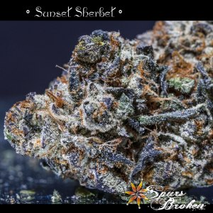 Sunset Sherbet - Cannabis Macro Photography by Spurs Broken (Robert R. Sanders)