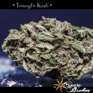 Triangle Kush - Cannabis Macro Photography by Spurs Broken (Robert R. Sanders)