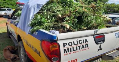 Luizlândia do Oeste (JK) – Polícia Militar descobre plantação de maconha e laboratório com mais de 30 espécies da planta