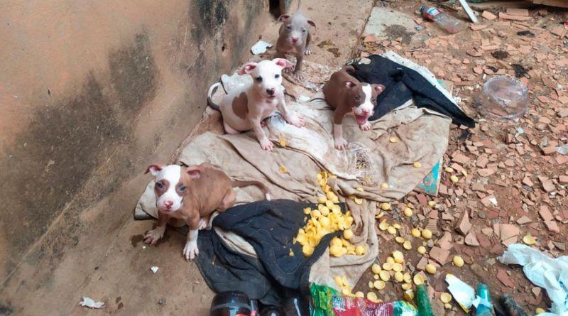Pitbulls e papagaios são resgatados em residência onde jovem foi assassinado em Unaí