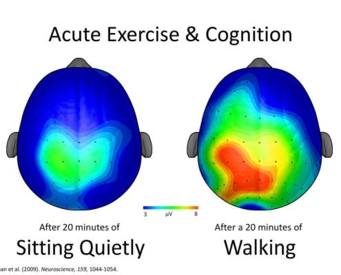 Exercise and brain cognition