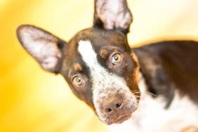 Pet Photography: Kix