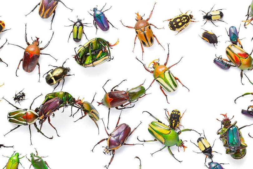 الحشرات على الأرض؟