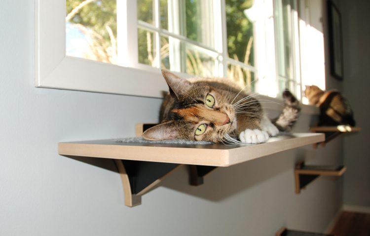 Fremont cat window perch