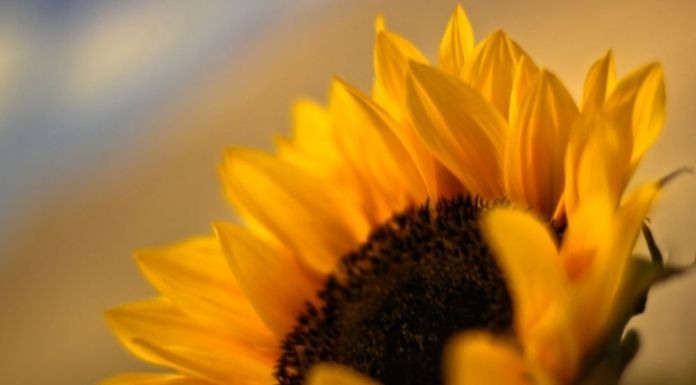box-of-sunshine-yellow-things-gifts-sunflower.