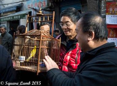 Xi'an Bird Market