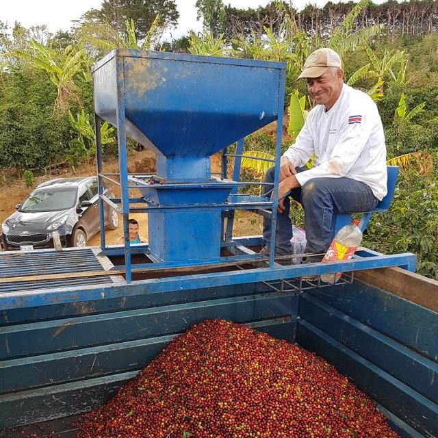 Coffee Beacn Processing