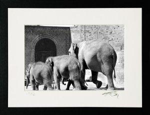 1983 Elephants
