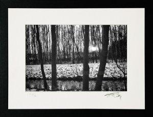 1983 Trees