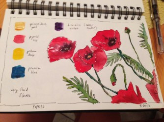 preliminary-sketch-of-poppies