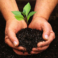 Gardening Brings Peace on Earth Good Will Toward Men