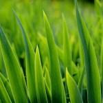Easy Interbay Mulch Method of Gardening