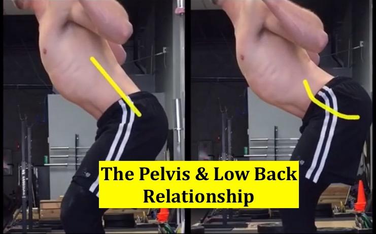 The Pelvis & Low Back Relationship – Squat University