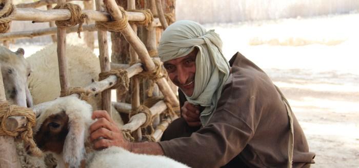 Mand med får