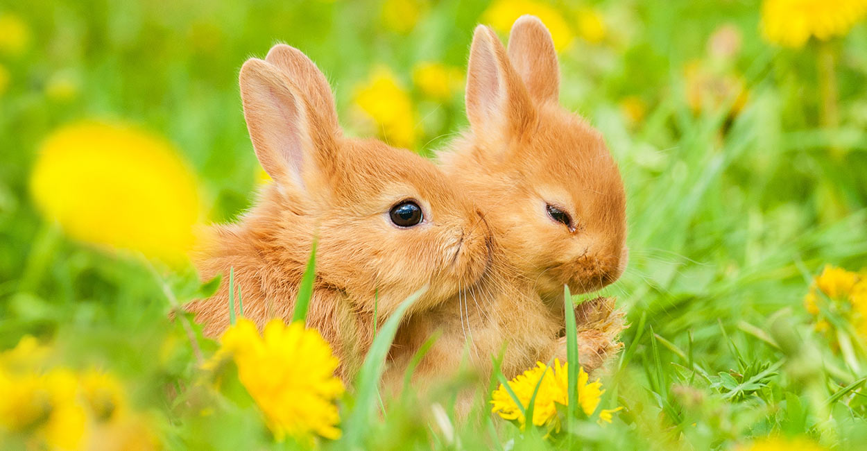 What Do Baby Rabbits Eat A Complete Nutritional Guide