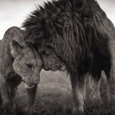 Amazing Animals (19)