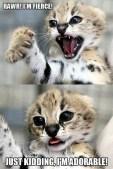 Amazing Animals (4)