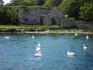 Swans in Ring by the old ruin, tides in.